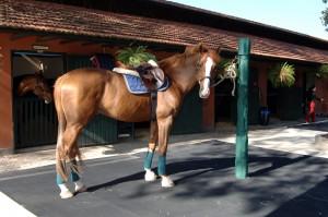 Foto Palanque central - cavalo SHP